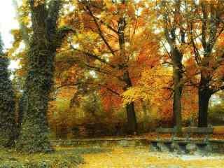 美麗的秋日風景桌面壁(bi)紙
