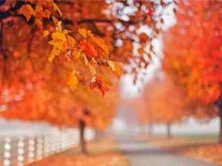 唯美的秋日的森林風景壁(bi)紙