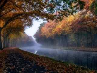 美麗的秋日的森林風景壁(bi)紙