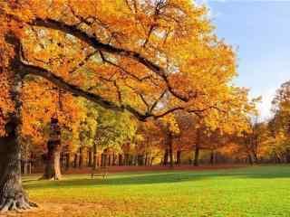 唯美的秋日山坡风景壁纸