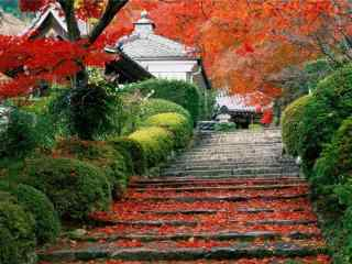 美丽的秋日红枫桌面壁纸