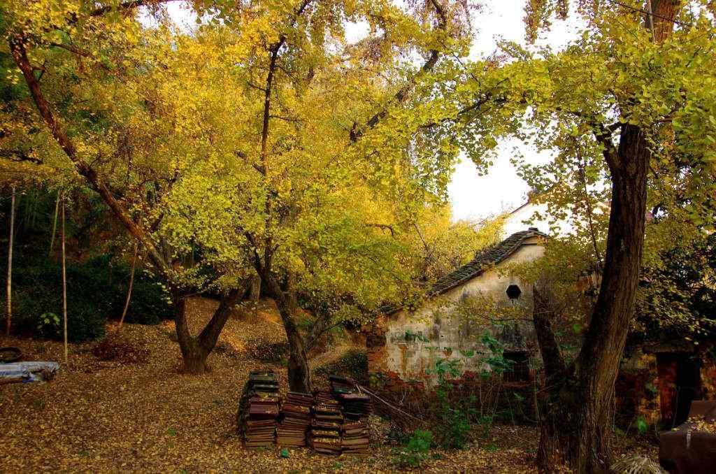 秋日意境风景桌面壁纸