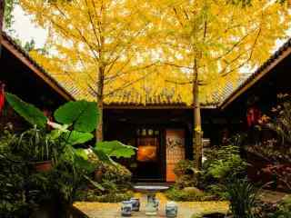 美麗的秋日銀杏桌面壁(bi)紙