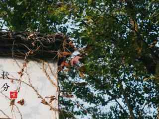 节气之秋分风景壁纸