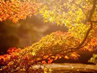 美丽的秋分节气风