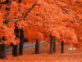 秋分节气之唯美落
