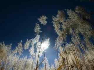 秋日芦苇荡风景桌