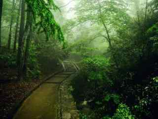 美丽的山林清晨风