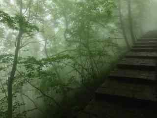 小清新山林风景桌