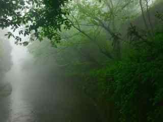 美丽的竹林间风景