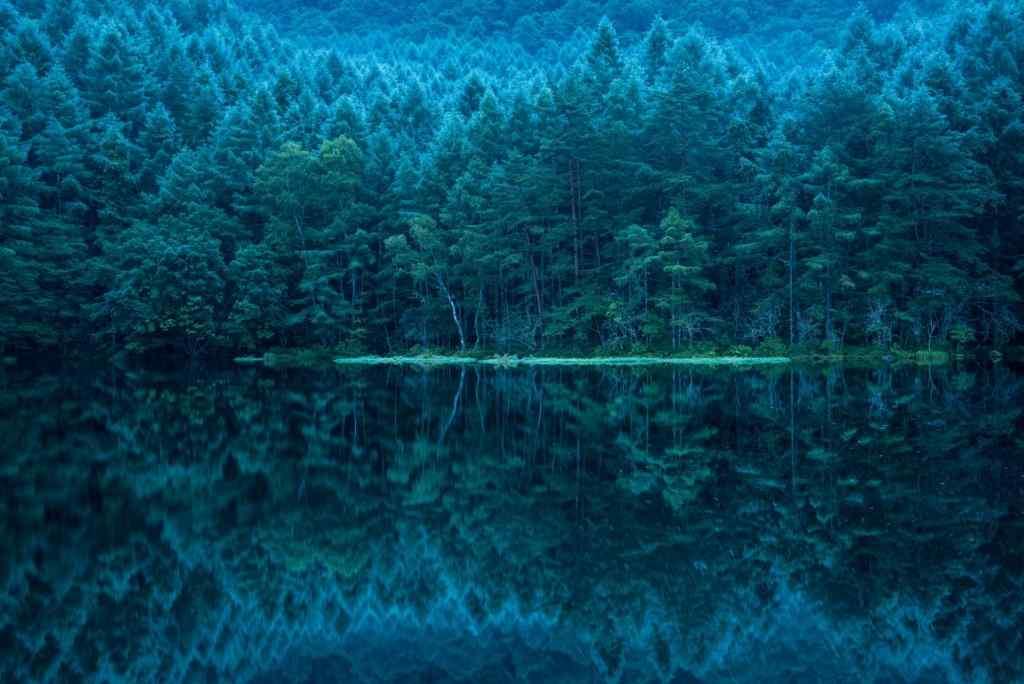 密林仙境唯美风景图片壁纸