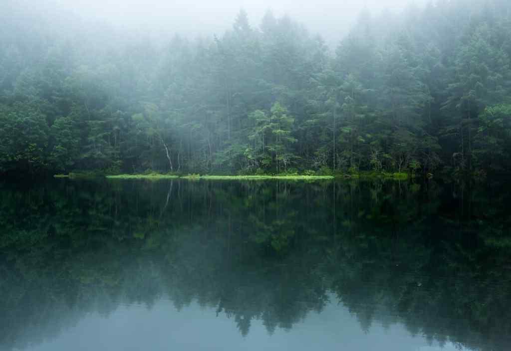 密林仙境风景图片壁纸