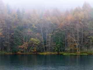 密林仙境风景桌面壁纸
