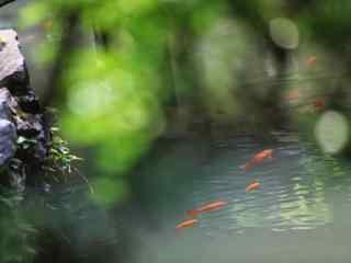 绿色小清新园林风景壁纸