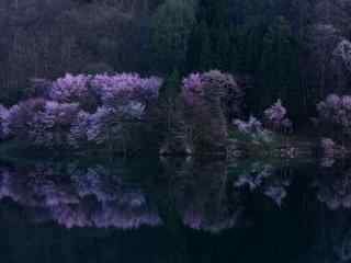 幽静的密林风景桌面壁纸