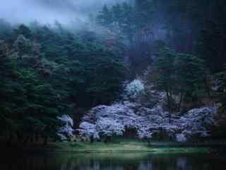 唯美的密林风景桌面壁纸
