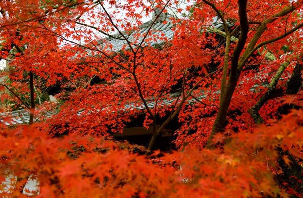 唯美的秋日风景图片壁纸