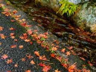 小清新秋日风景图片壁纸