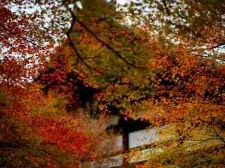 唯美的秋日风景桌面壁纸