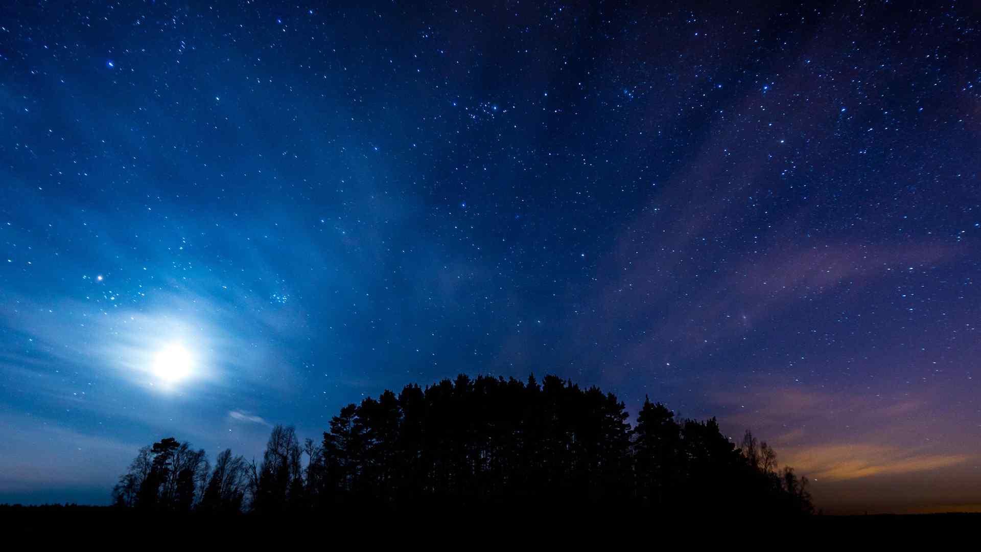 夜晚树林星空风景壁纸