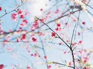 自然风景图片春季
