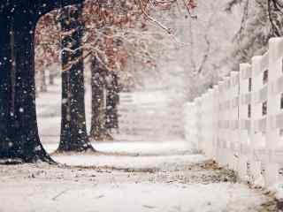 雪花自然唯美风景高清桌面壁纸