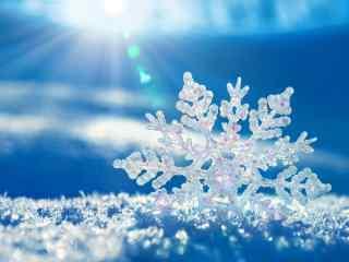冬季唯美雪花高清桌面壁纸