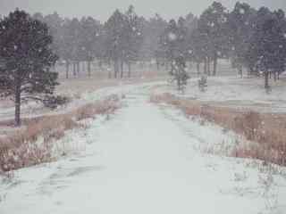 冬季的草原漫天雪花飞舞高清桌面壁纸