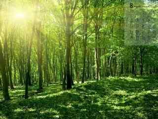 2018年8月日历壁纸阳光穿过树木到达地面风景壁纸