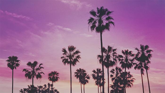 海边椰子树紫色天空高清风景桌面壁纸