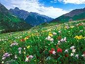 唯美花海高清自然风景壁纸