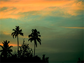 椰子树与天空自然风景高清壁纸