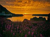 湖边花海与落日相叠唯美自然风景高清壁纸