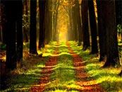 唯美林间小道自然风景高清壁纸图片