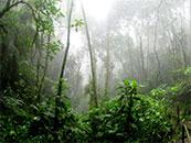 静谧清新森林自然风景高清壁纸