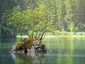 綠色護眼自然景觀河流中的小島桌面壁紙