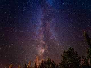森林上的浪漫星空