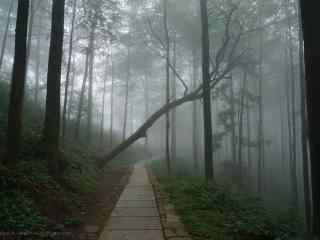 云雾缭绕的莫干山