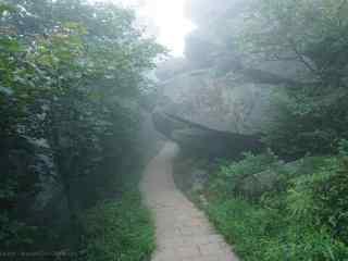 唯美清晨云雾里的莫干山小道桌面壁纸