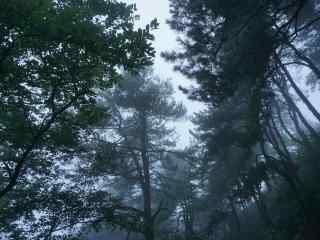 云雾缭绕的莫干山树林桌面壁纸