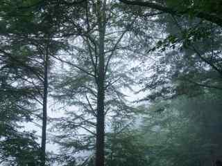 莫干山郁郁葱葱的树林桌面壁纸