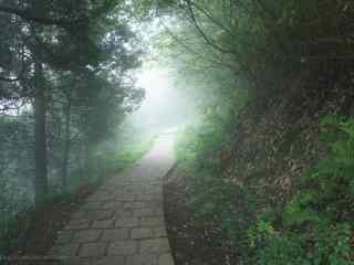 曲径通幽的莫干山树林桌面壁纸