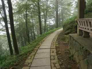 莫干山幽静的竹林小道桌面壁纸