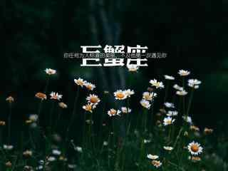 小清新美丽雏菊文艺巨蟹座星座壁纸