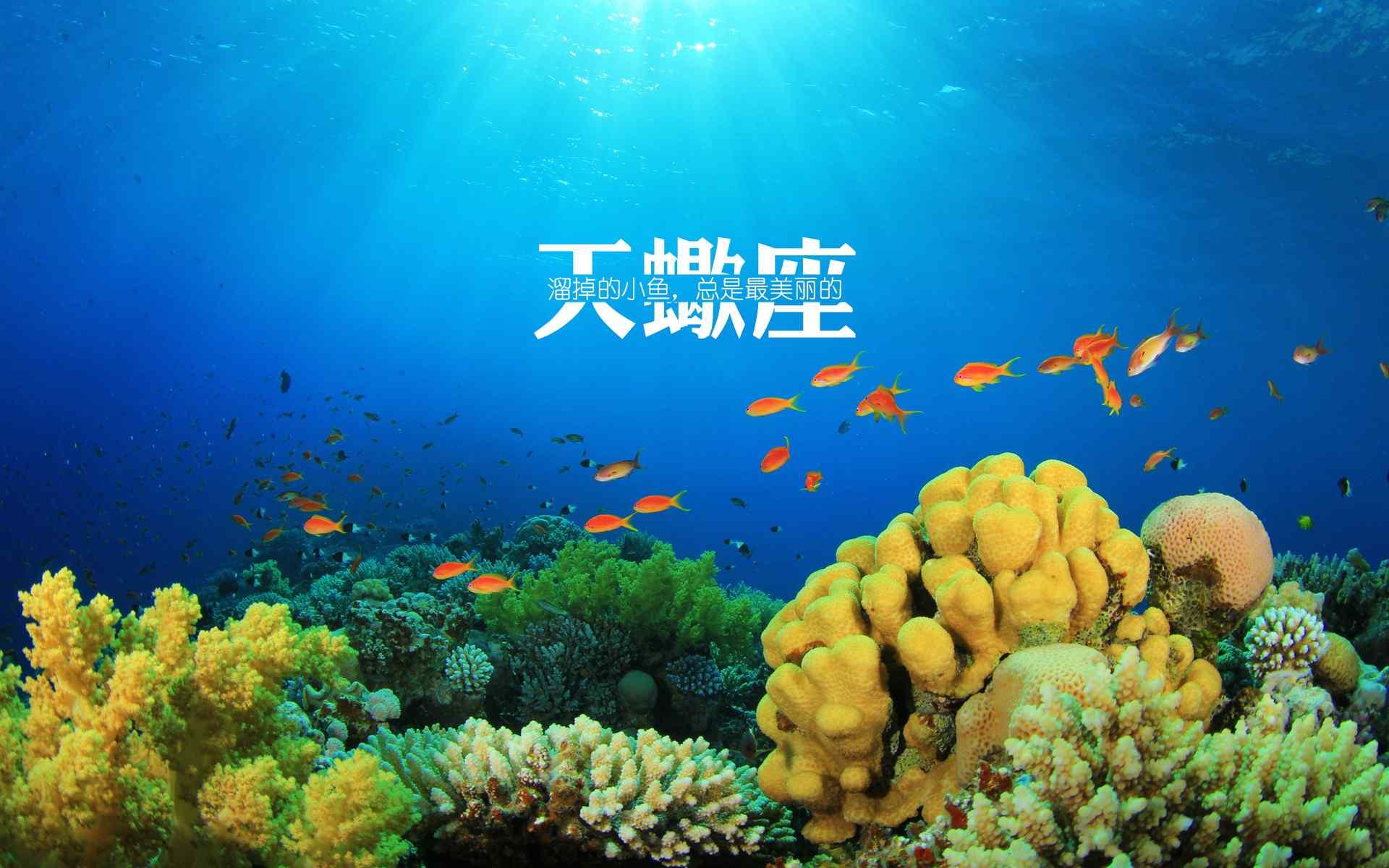大海与鱼非主流文字星座壁纸