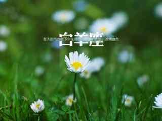 小清新文艺花朵背景文字白羊座星座壁纸