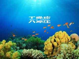 大海与鱼非主流文