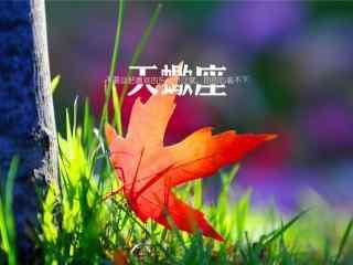 小清新红色枫叶非主流文字天蝎座星座壁纸