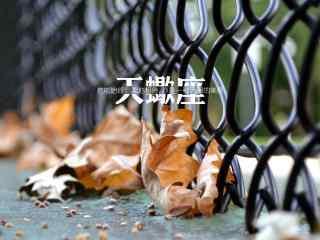 秋风落叶非主流文字天蝎座星座壁纸