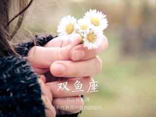 唯美小雏菊非主流文字双鱼座星座壁纸